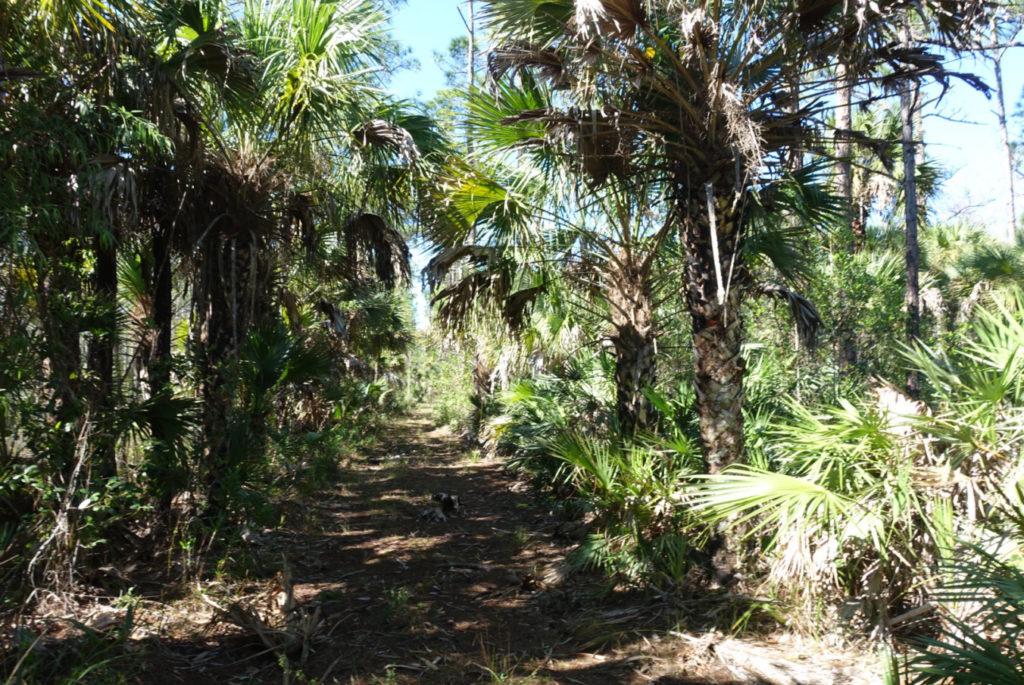 florda trail